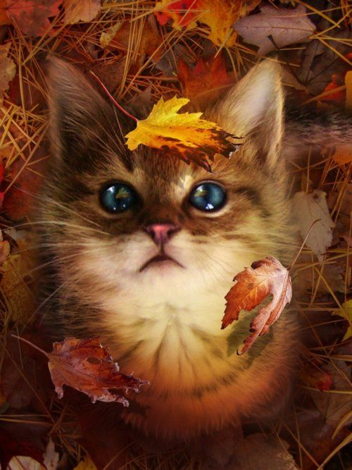 chat feuilles mortes