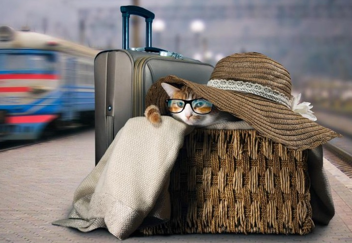 vacances chat bagages